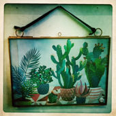 kaktusbild